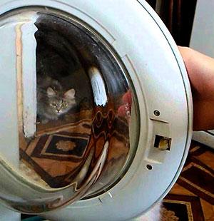 Ремонт двери стиральной машины